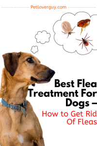 Best Flea Treatment For Dogs – How to Get Rid Of Fleas