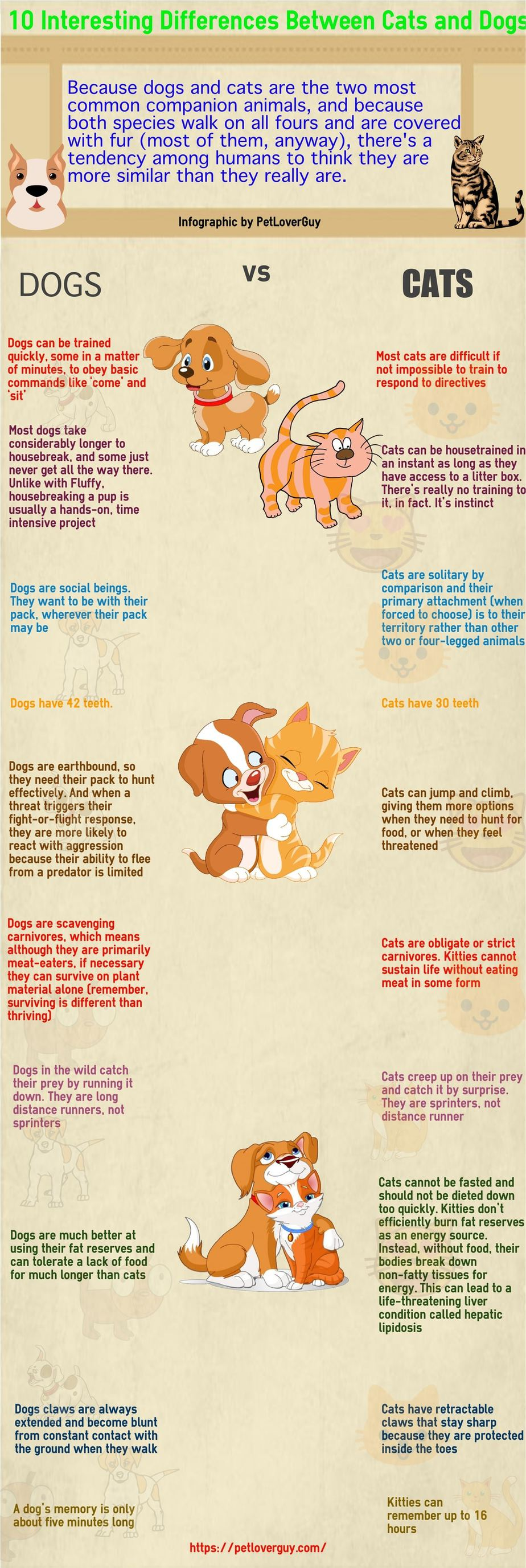 Best Dog Food For Labs >> 10 Main Differences Between Cats And Dogs (Infographic)