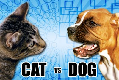 differences betweens cats and dogs