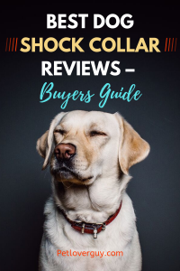 Best Dog Shock Collar Reviews – Buyers Guide