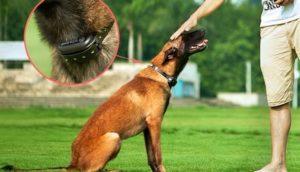 Best Dog Shock Collar Reviews