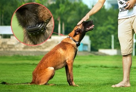 The 10 Best Dog Shock Collar Reviews in 2018 | Pet Lover Guy