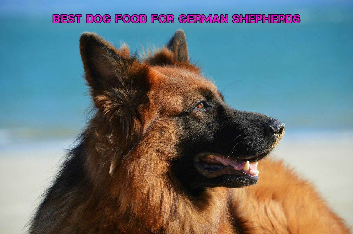 Best Dog Food For Labs >> Best Dog Food for German Shepherds - Expert Buying Guide [2017]