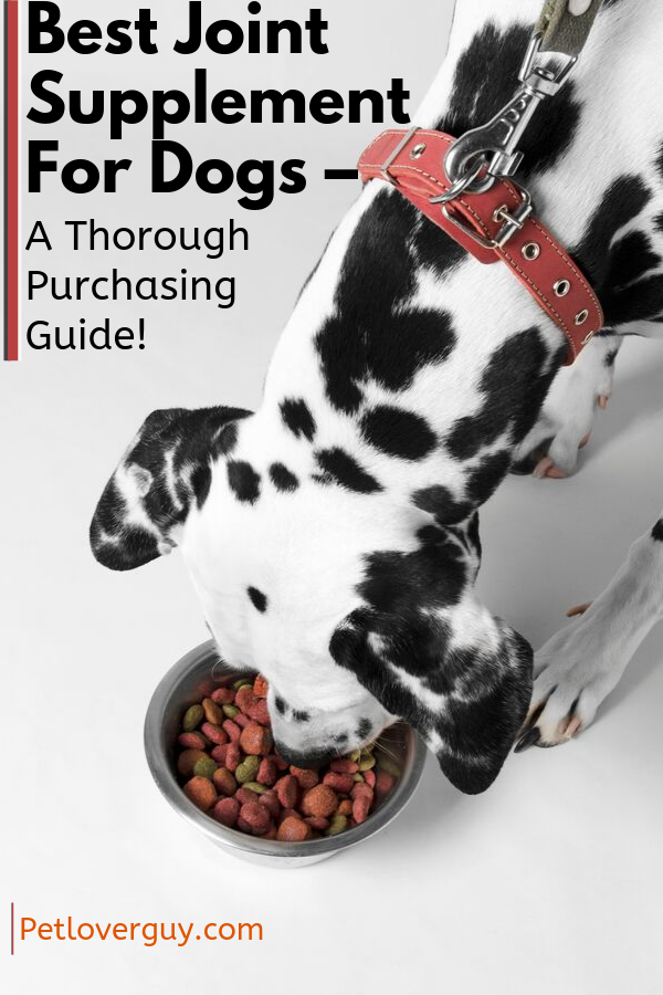 Best Joint Supplement For Dogs – A Thorough Purchasing Guide!