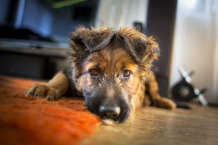 Most Nutritious Dog Food For Puppies