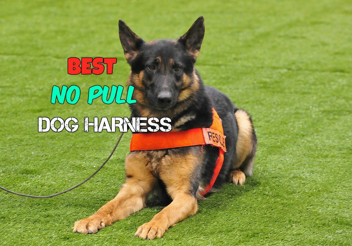 Best Dog Food For Labs >> Best No Pull Dog Harness Reviews - Get The Facts Before You Buy
