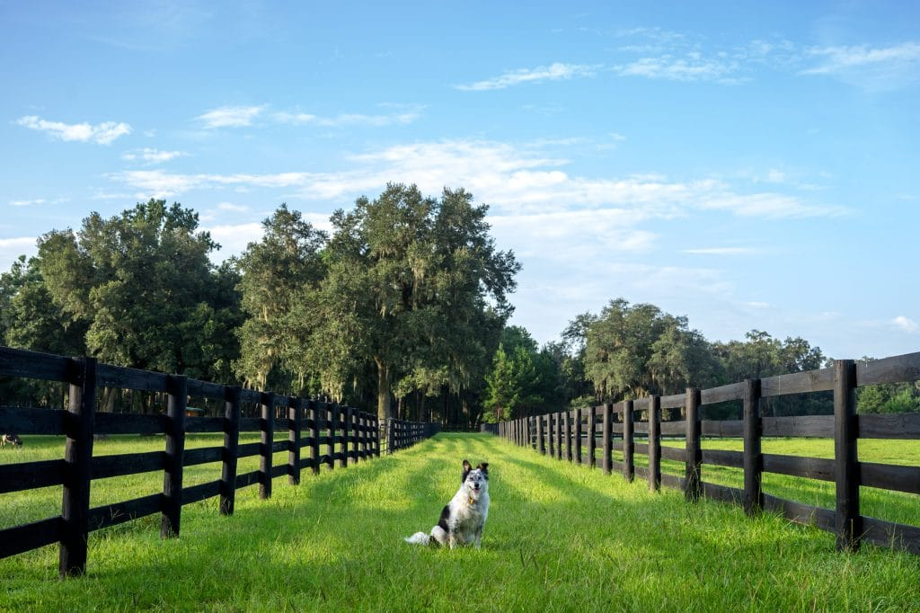Best Wireless Dog Fence For Large Area