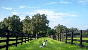 Best Wireless Dog Fences For Large Areas