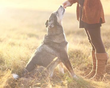 7 Best Dog Treats to Keep Fido Cool This Summer
