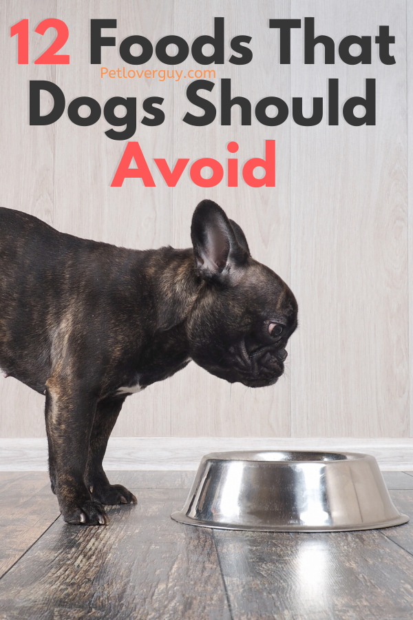 12 Foods That Dogs Should Avoid [Infographic]
