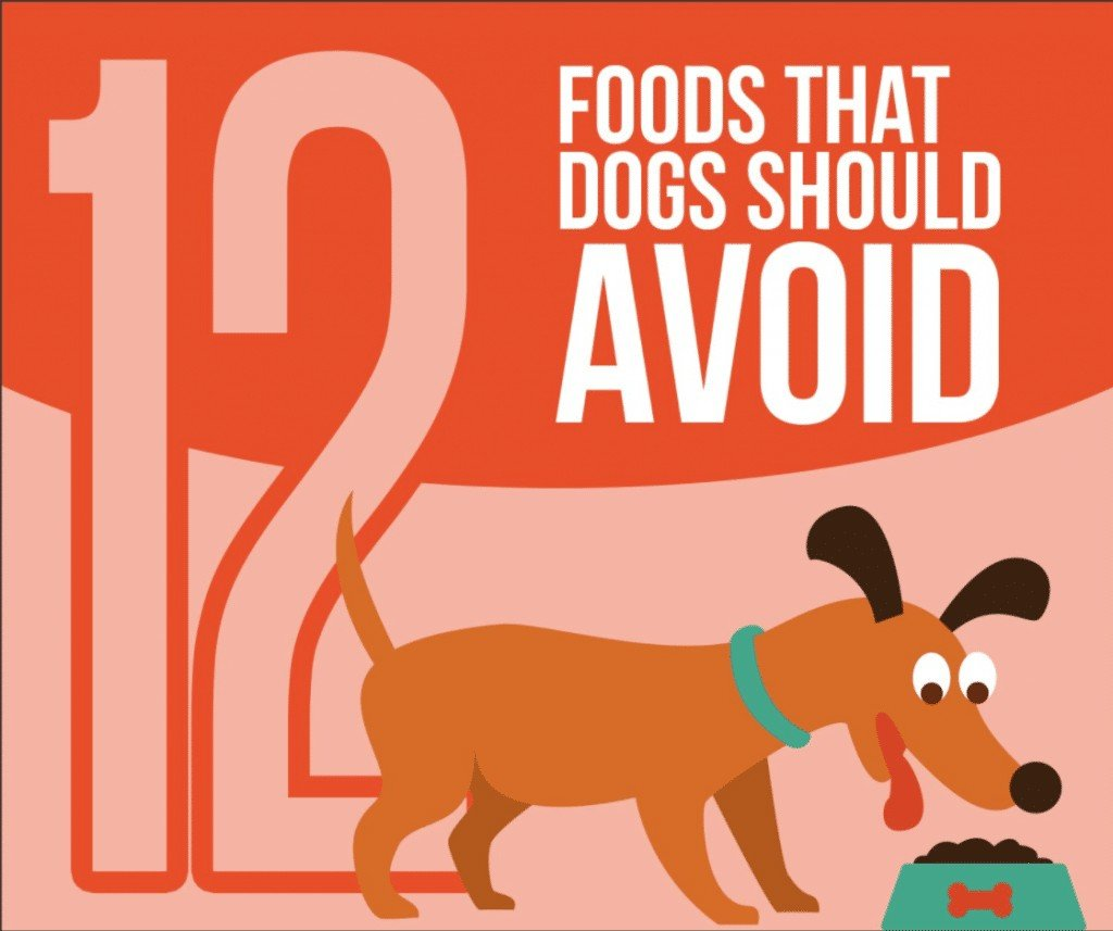 12 Foods That Dogs Should Avoid
