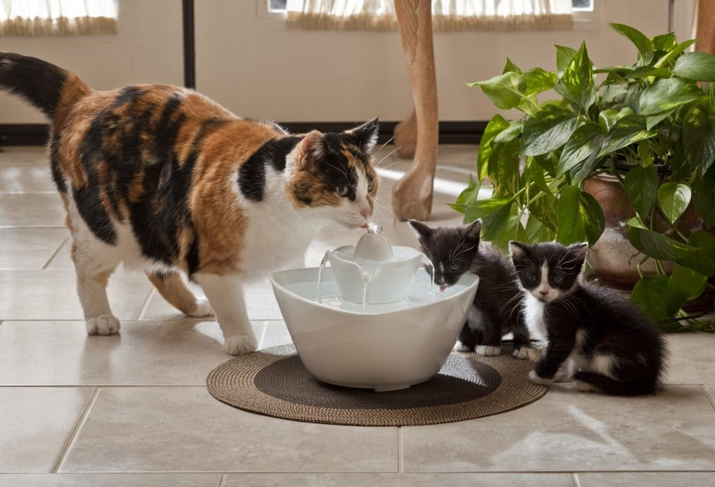Difference Between Cat And Dog Drinking Water