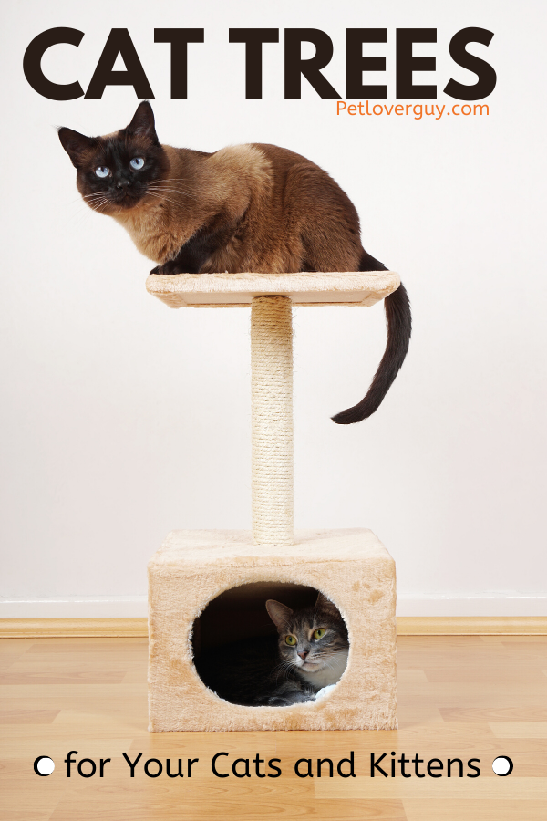 Cat Trees for Your Cats and Kittens