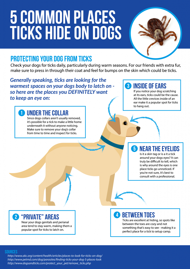 5 Common Places Ticks Hide On Dogs