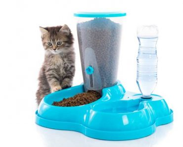 Only The Best Automatic Cat Feeders to Solve Your Feeding Problems