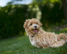 Alleviate Dog Allergies with These 5 Human Foods