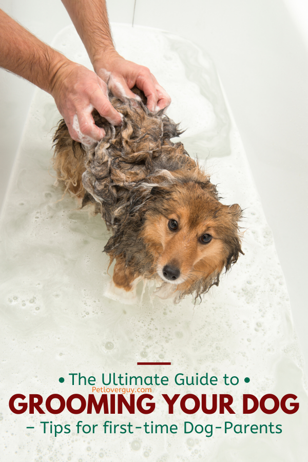 The Ultimate Guide to Grooming Your Dog - Tips for first-time Dog-Parents