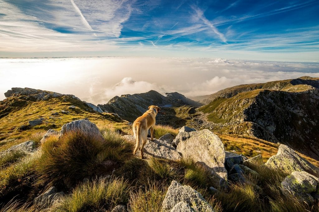 Top 10 Tips For Taking Your Dog Up A Mountain