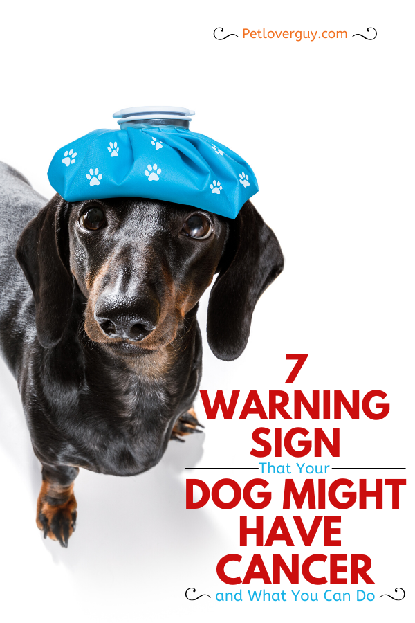 7 Warning Signs That Your Dog Might Have Cancer and What You Can Do