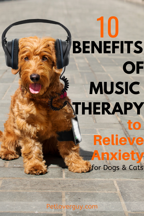 10 Benefits of Music Therapy for Dogs & Cats to Relieve Anxiety