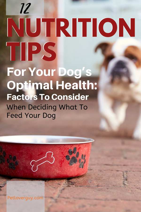 12 Nutrition Tips For Your Dog's Optimal Health: Factors To Consider When Deciding What To Feed Your Dog
