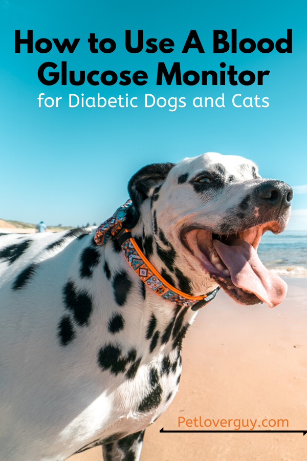 How to Use A Blood Glucose Monitor for Diabetic Dogs and Cats