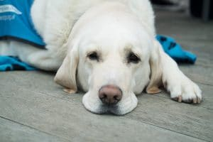 Warning Signs That Your Dog Might Have Cancer