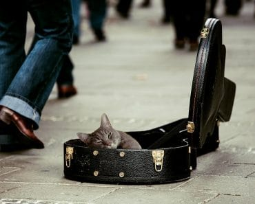The Benefits of Music Therapy for Dogs & Cats