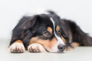 warning-signs-dog-cancer_lack-energy