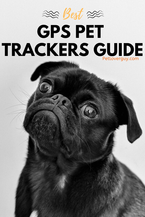 Best GPS Pet Trackers Guide