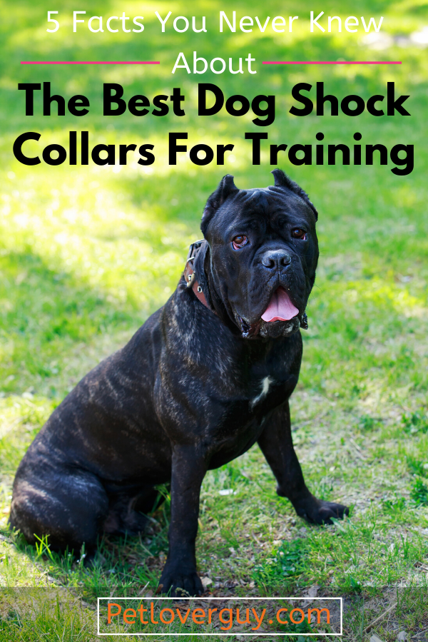 Best Dog Shock Collar for Training