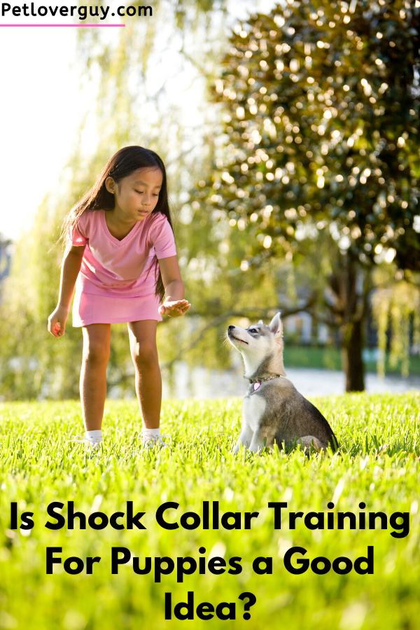 shock collar training for puppies