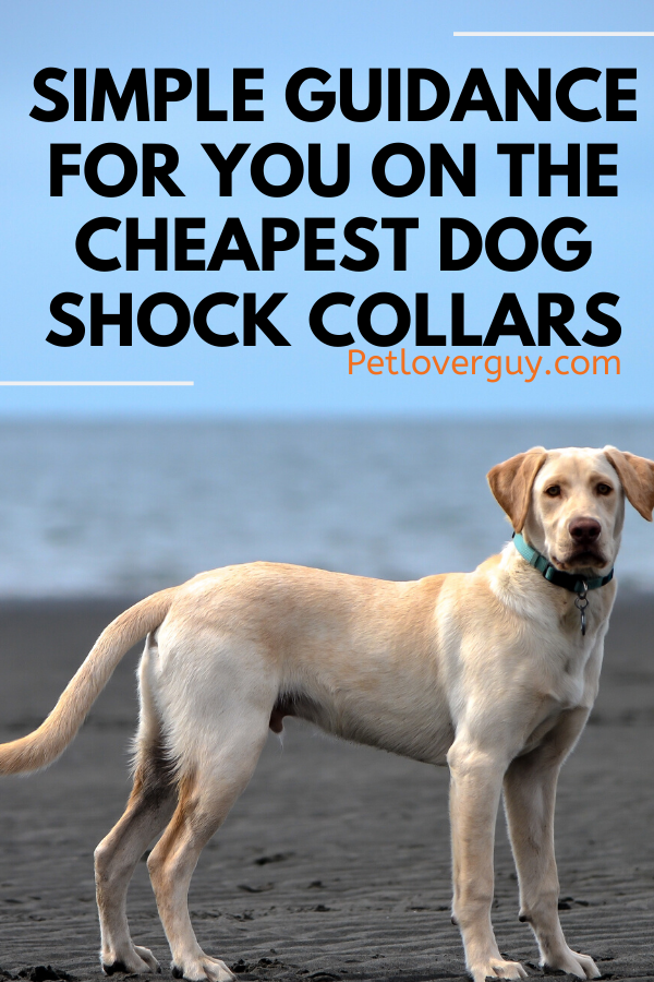 Cheapest Dog Shock Collars
