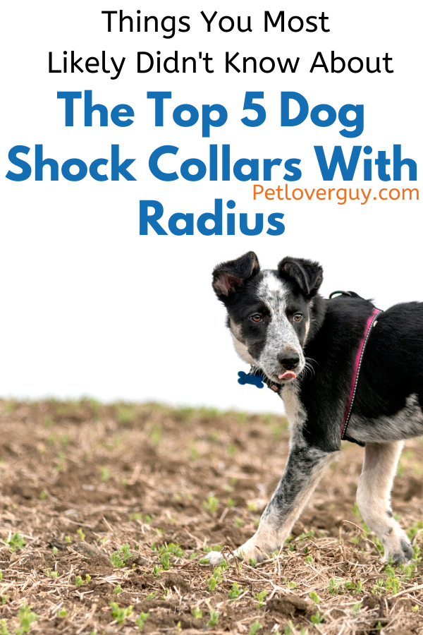dog shock collar with radius