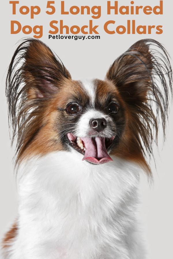 long haired dog shock collar