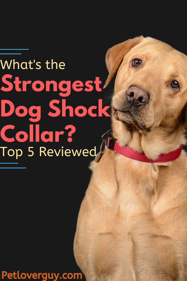 Strongest Dog Shock Collar