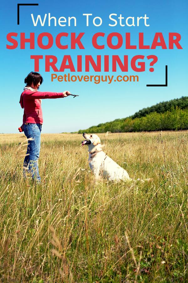 When To Start Shock Collar Training