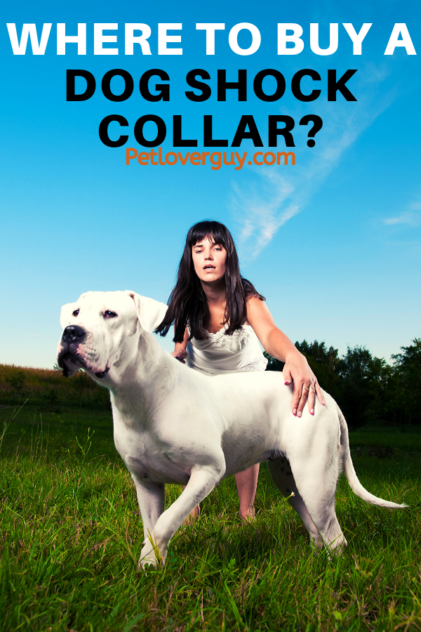 Where To Buy A Dog Shock Collar