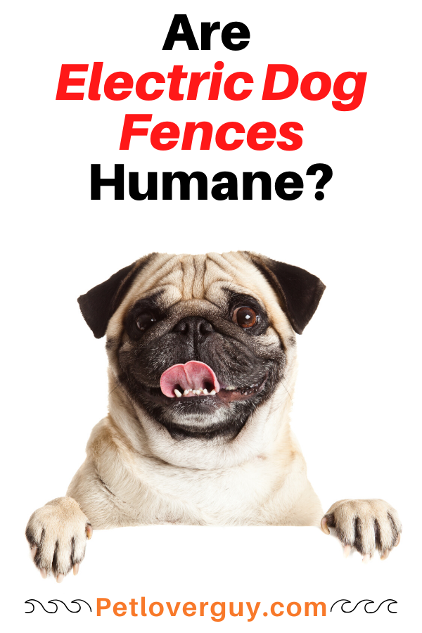 are electric dog fences humane