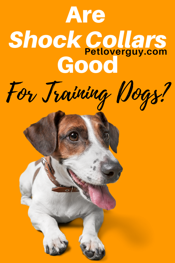 are shock collars good for training dogs