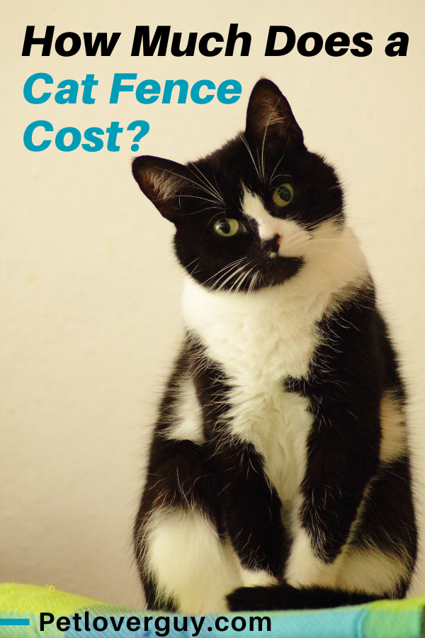 How Much Does a Cat Fence Cost?