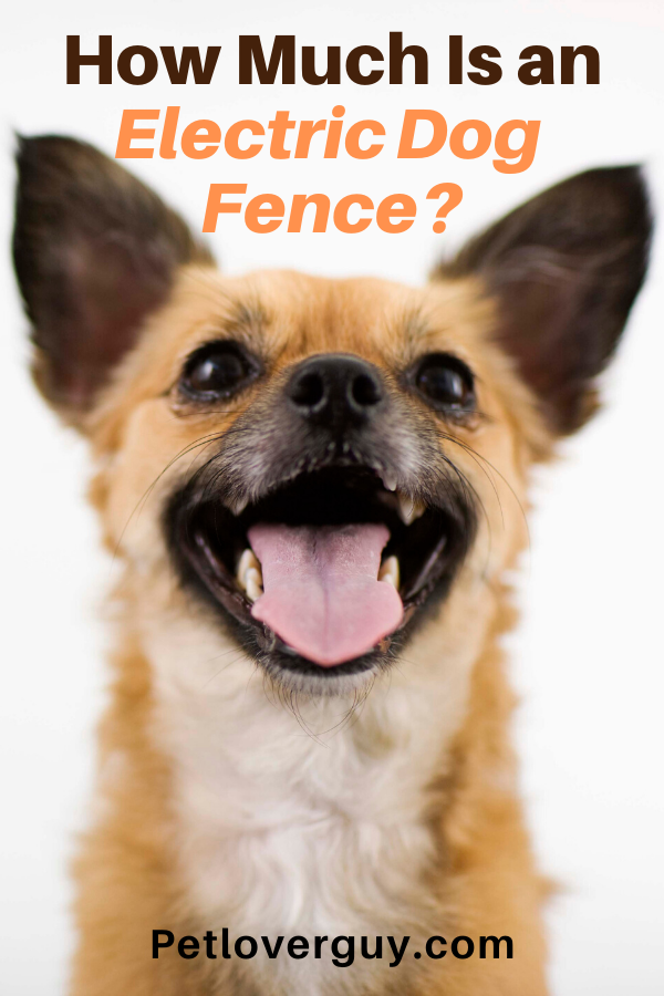 how much is an electric dog fence