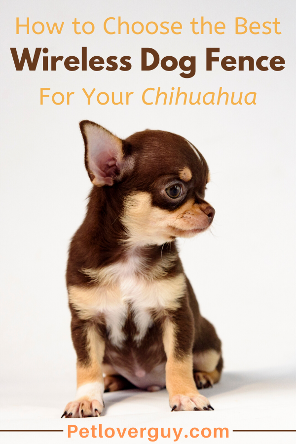 wireless dog fence for chihuahua