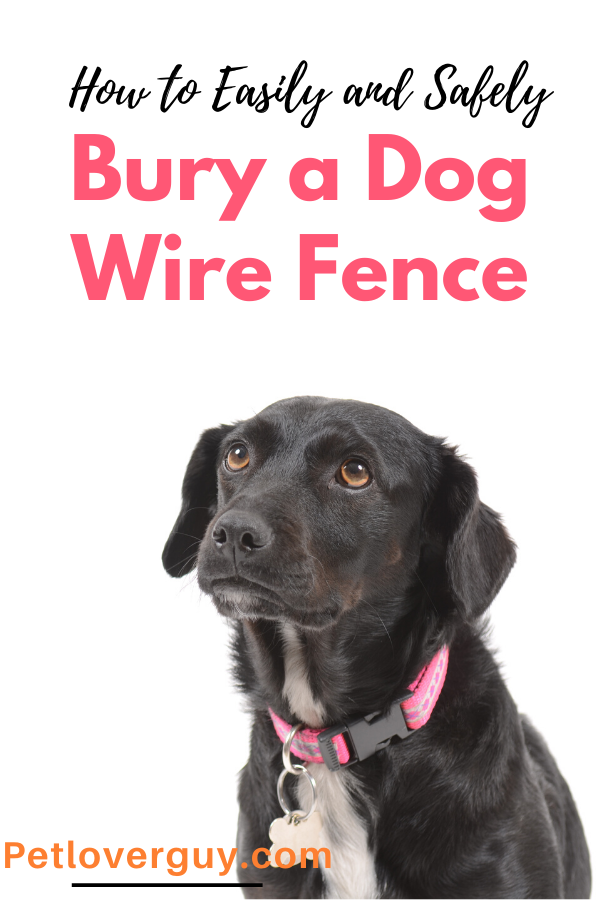 how to bury a dog fence wire