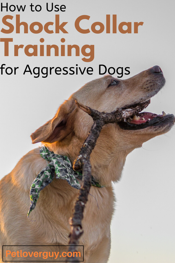 Shock Collar Training for Aggressive Dogs