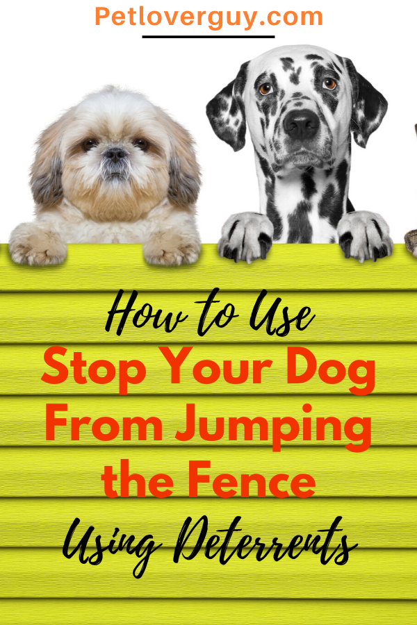 dog fence jumping deterrent