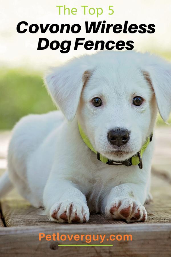 covono wireless dog fence