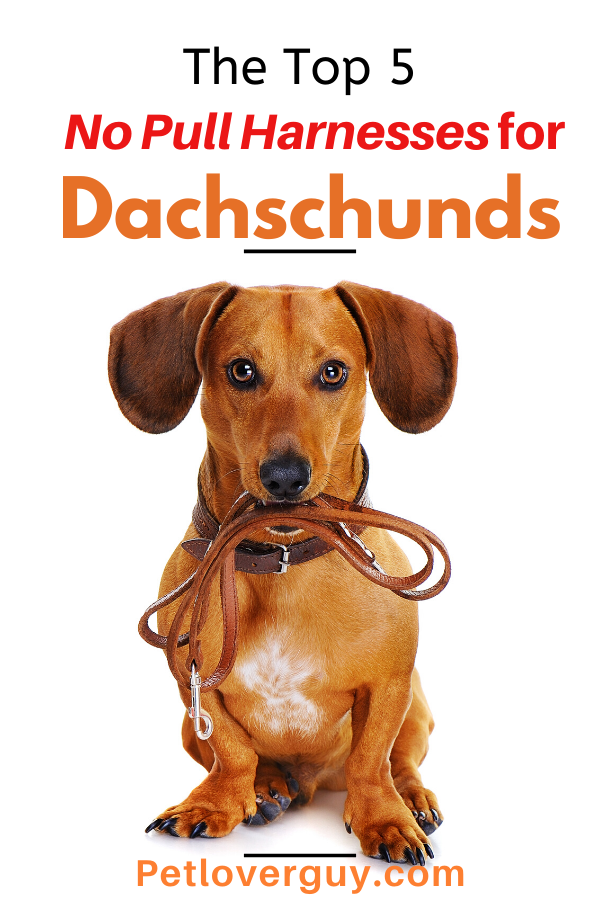 no pull harness for Dachshunds