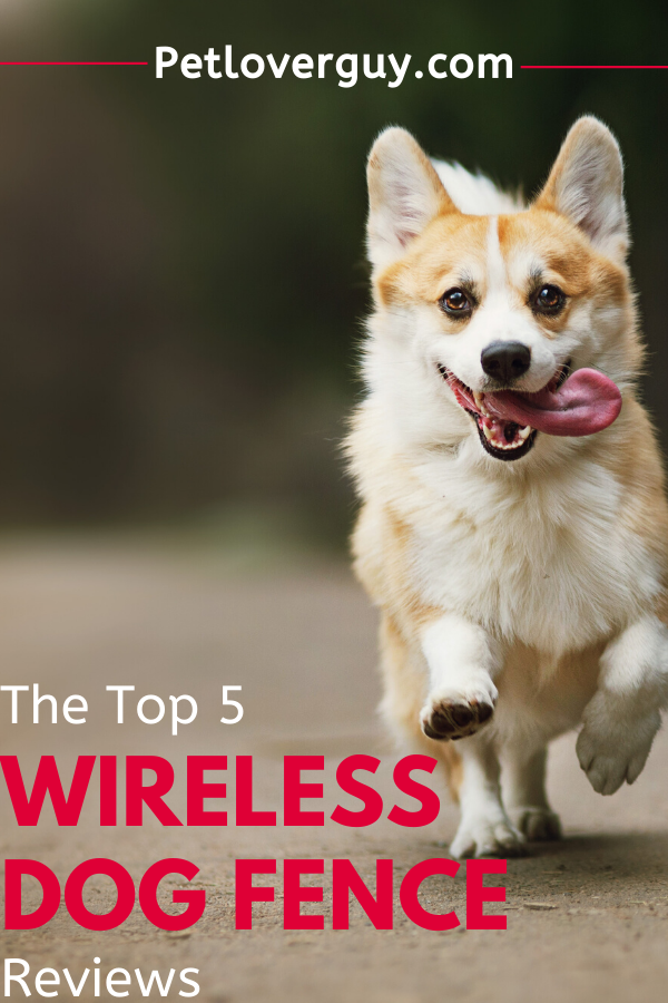 wireless dog fence small dogs