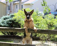 can a dog jump a 4 foot fence